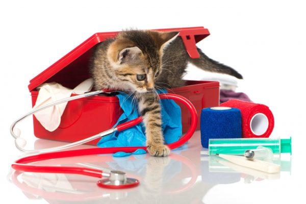 ветеринарная аптечка и котёнок