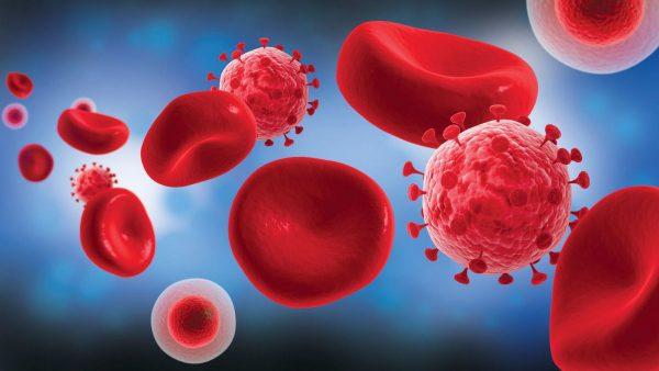 вирус и клетки крови