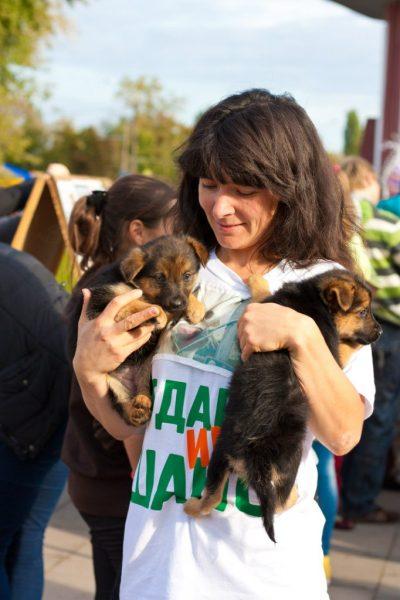 Волонтёр с щенками на руках