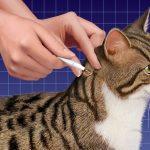 Нанесение капель на холку кошке