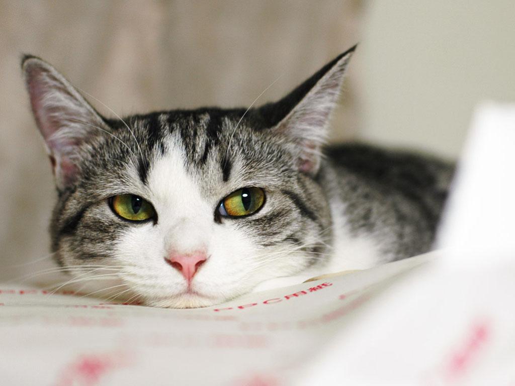 Как бороться с глистами у кошек