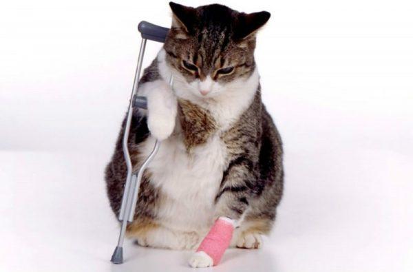 Кошка с перевязаной лапой и костылём