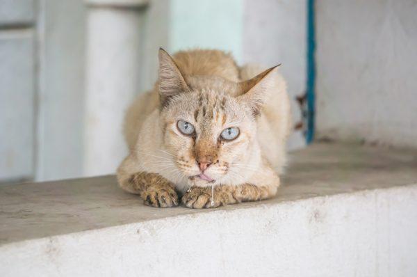 Кошка со слюной