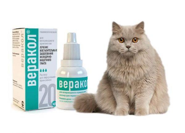 Капли Веракл и дымчатая кошка