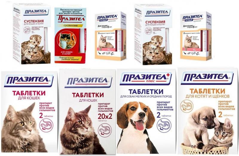 Ветеринарный препарат Празител