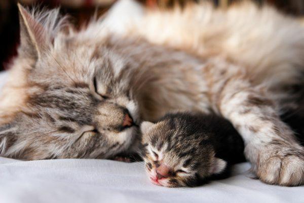 Серая кошка и маленький котёнок
