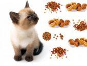 Тайский котёнок и сухие корма