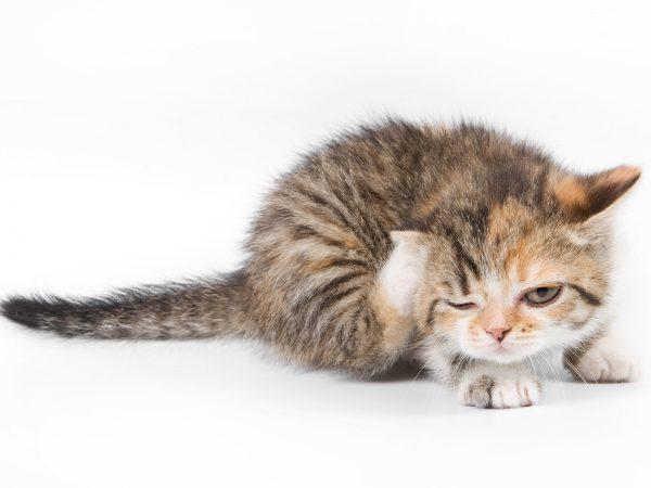 Вычесывание котёнка