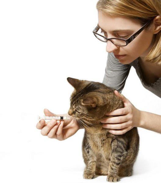 Девушка даёт кошке суспензию с помощью шприца