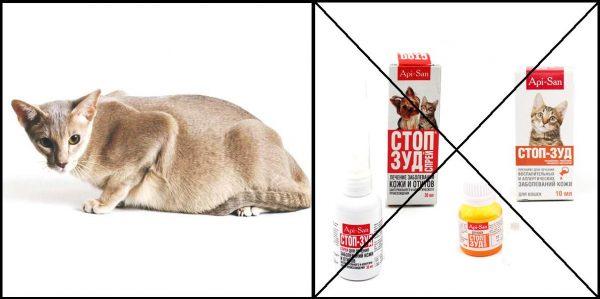 Беременная кошка и Стоп-зуд