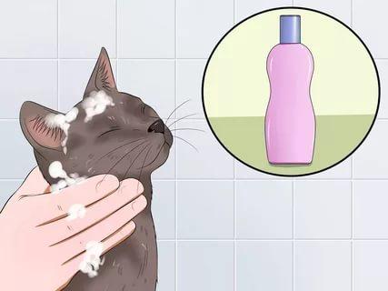 Серую кошку моют с шампунем
