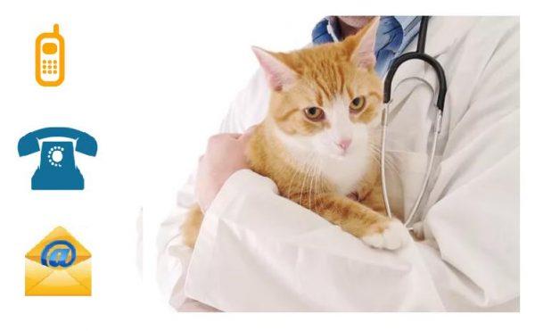 Ветеринар с кошкой, телефон и e-mail
