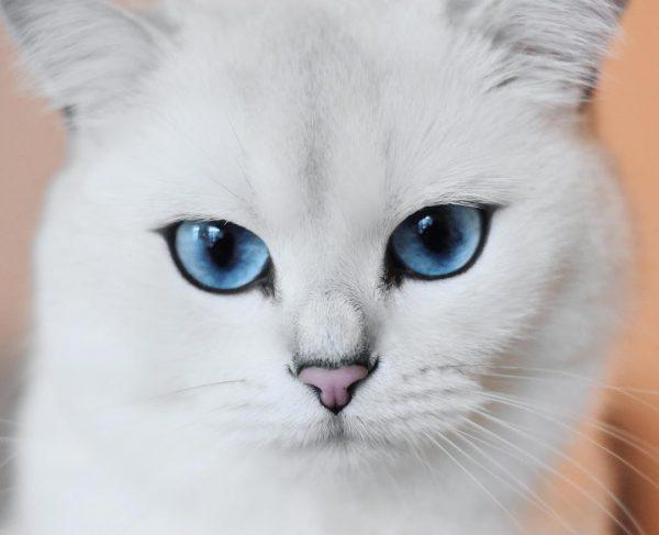 Кошка Коби