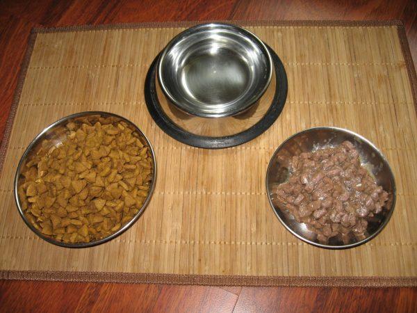 Корм и вода для кошки