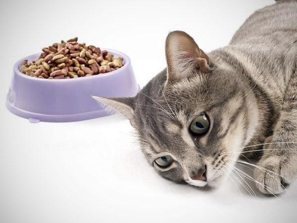 Кошка не ест корм