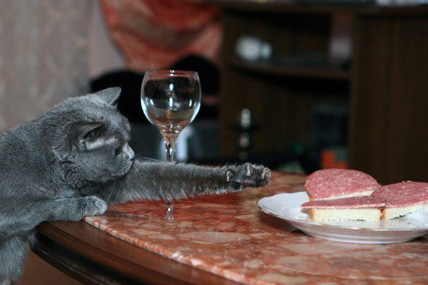 Кошка ворует со стола