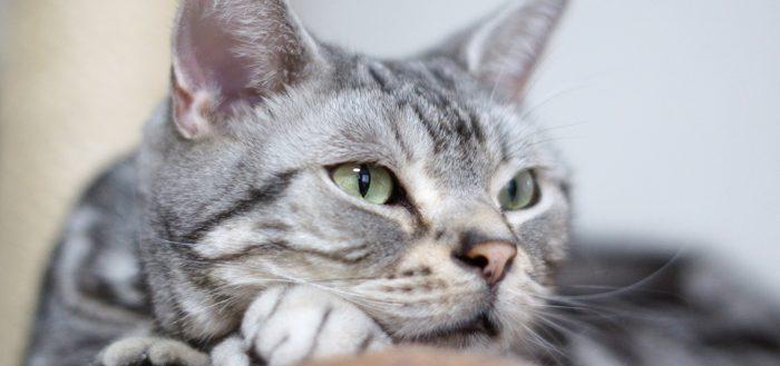 Кошке крупным планом