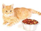 Кот и миска с кормом