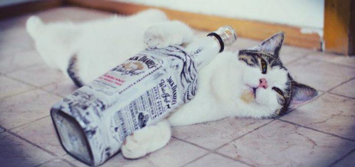 Кот с бутылкой