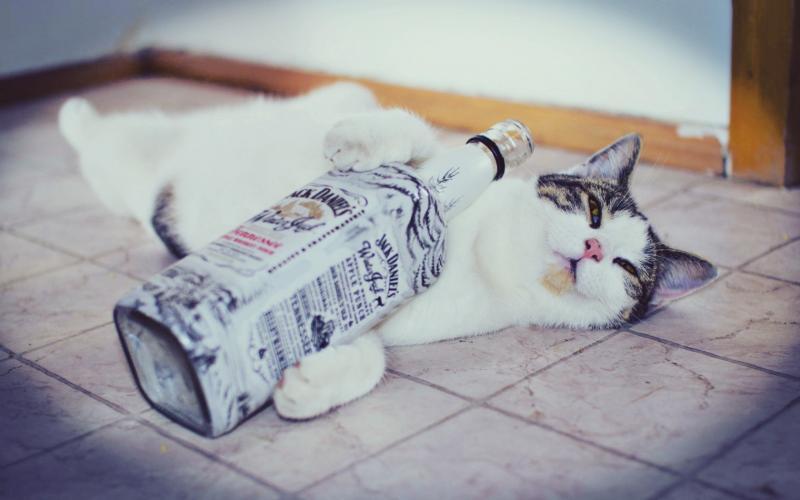 Почему коты и кошки любят валерьянку и как она на них действует