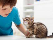 Котёнок с блохами и мальчик