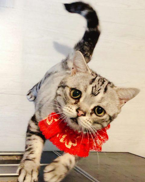 Кошка Луху