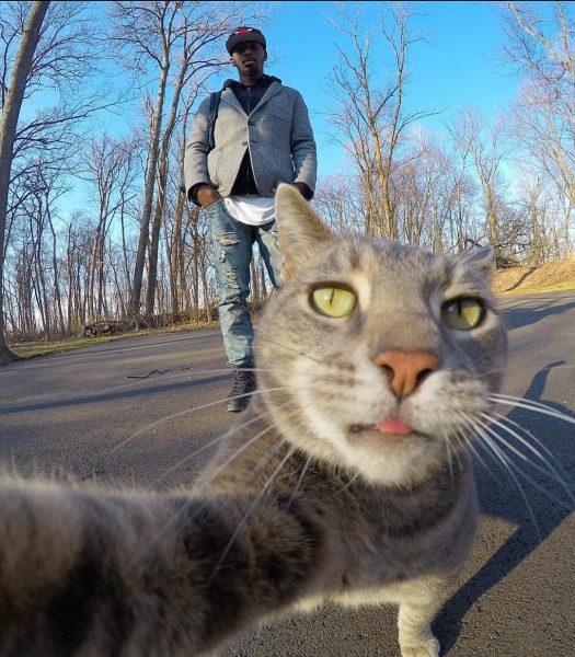 Кот Мэнни на природе