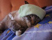 Микопламоз у кошки