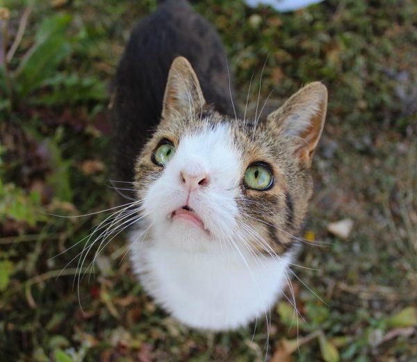 Уникальный кот Монти
