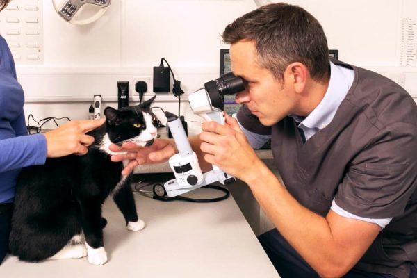 У котенок обильно слезятся глаза thumbnail