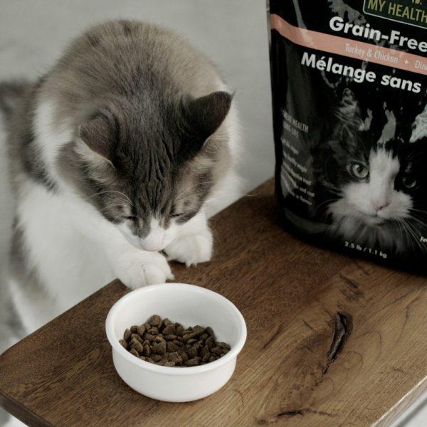Кошка, корм в миске и упаковка корма