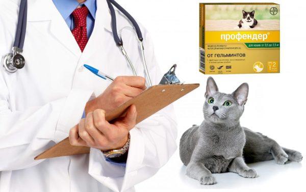 Ветеринар, русская голубая кошка и упаковка Профендера