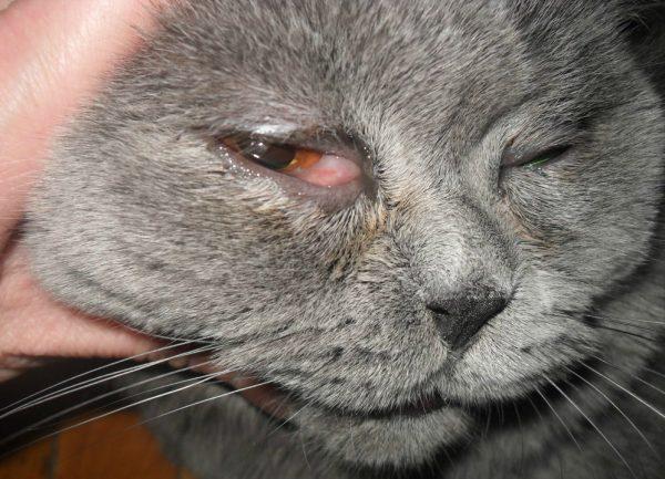 Покраснение глаз и слёзотечение