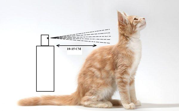 Схема нанесения спрея на кожу кошки