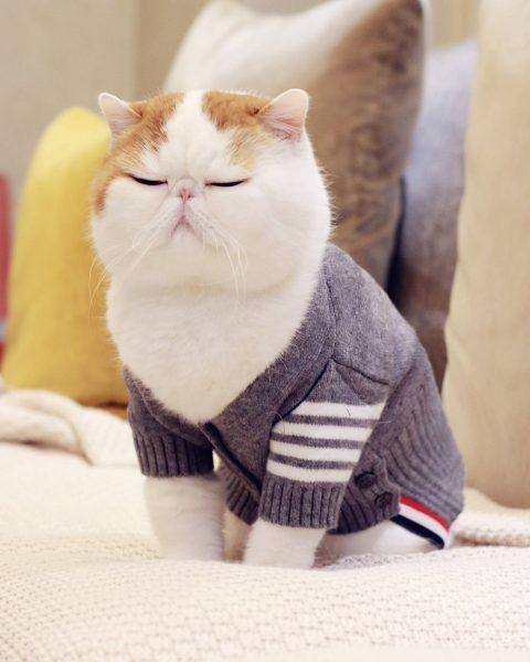Деловой кот Снупи