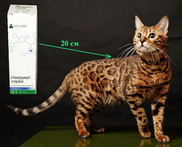Ивермек-спрей на расстоянии 20 см от кошки