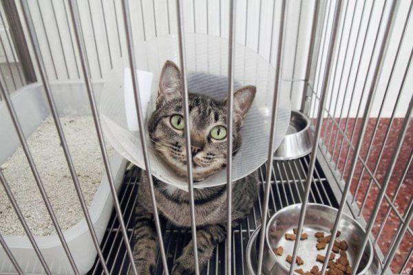 Кошка в большой клетке