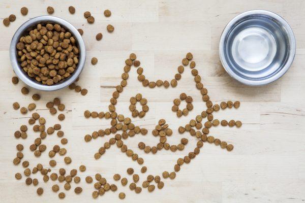 Кошачий корм и вода