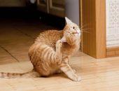 Кошка с клещами