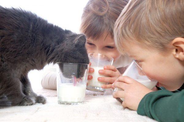 Кот пьёт молоко