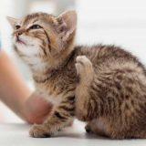 Котёнок чешется