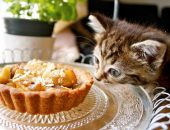 Котёнок нюхает пирожное