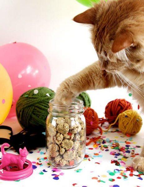 Кошка лапой трогает лакомство в банке