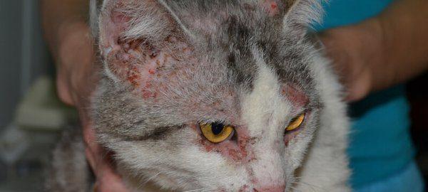 Милиарный дерматит аллергической природы