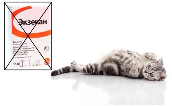 Беременная кошка и Экзекан