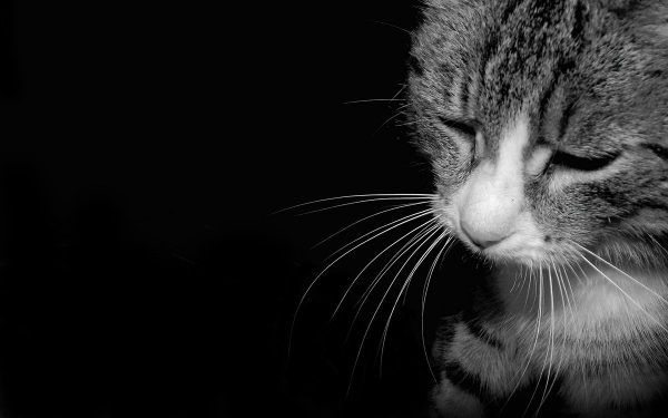 Грустный кот с закрытыми глазами