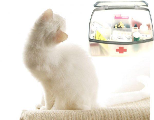 Белая кошка и пластиковая аптечка с лекарствами