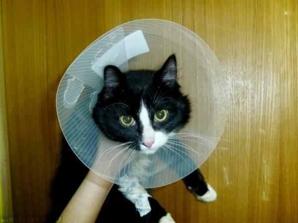 Шейный воротник для кошки