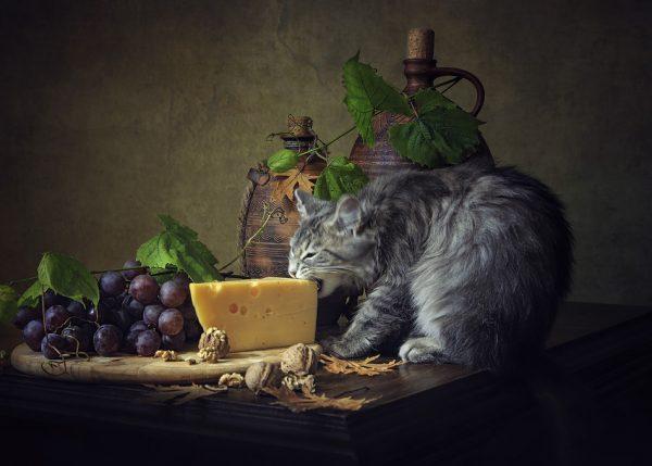 Сыр и кошка