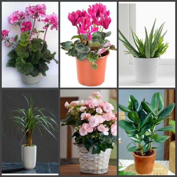 Растения, ядовитые для котов